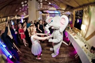Wielki słoń na weseleu Gdynia
