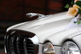 biały Jaguar Sosnowiec
