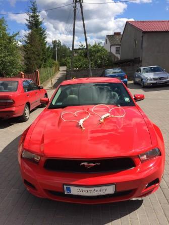 Mustangiem.pl Gdynia, Gdańsk, Wejherowo, Lębork, Słupsk, Koszalin