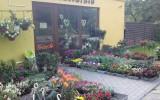 Kwiaciarnia Soraja w Bytowie Byt�w