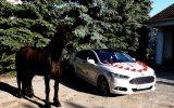 Auto/samochód/konie do ślubu lub inne okazje - Ford Mondeo MK5 ST Line Warszawa