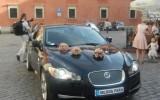Jaguar XF SV8 angielskim asrystokrat� do �lubu! Warszawa