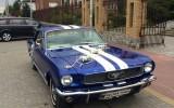 Mustangiem do �lubu Radzy� Podlaski