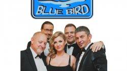 BLUE BIRD Bydgoszcz