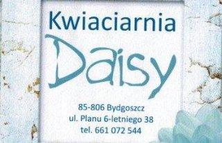 Kwiaciarnia Daisy Bydgoszcz