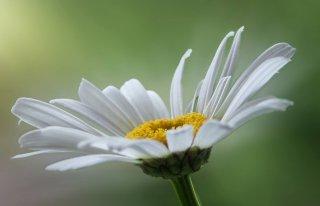 Kwiaciarnia Margarytka Połaniec