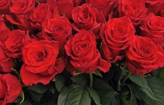Kwiaciarnia Malborska Malbork