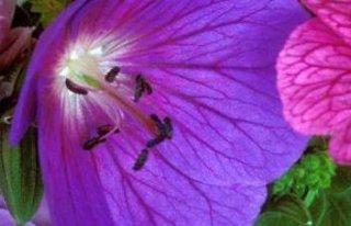 Kwiaciarnia Tychy Honoratka Tychy