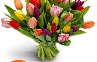 Kwiaciarnia Halokwiaty Bytom
