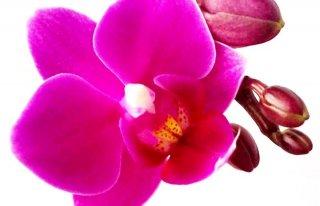 """Kwiaciarnia """"Storczyk"""" Bytom"""
