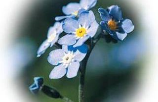 Kwiaciarnia Niezapominajka Tarnowskie Góry