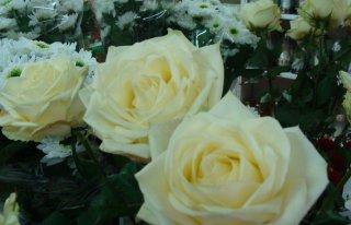 Kwiaciarnia Niezapominajka Stęszew