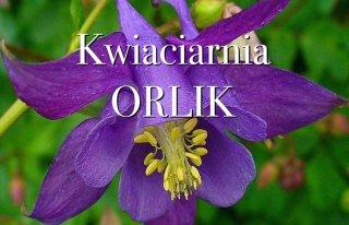 Kwiaciarnia Orlik Pabianice