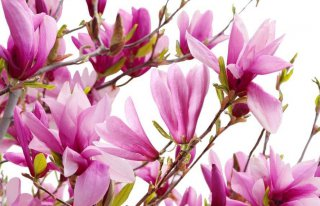 "Kwiaciarnia ""Magnolia"" Zielona Góra"