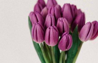 Targ Kwiatowy Cieszyn
