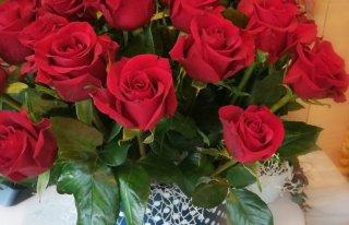 Kwiaciarnia Begonia Grudziądz Grudziądz