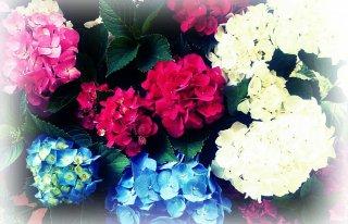 Kwiaciarnia Nemezja Głogów