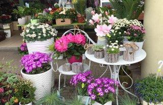 Bella Rosa Pracownia Florystyczna Proszowice