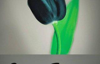 Kwiaciarnie Czarny Tulipan Poznań