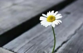 Kwiaciarnia Stokrotka Dzierżoniów