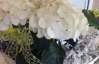 Kwiaciarnia Hortensja Koszalin
