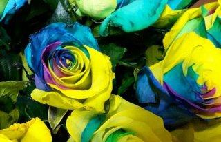 Budka z kwiatami Danuty Rintz Puck