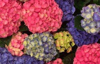 Flora Decoration Poznań