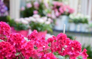 Kwiaciarnia Strzeszyn Grecki Poznań