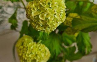 Kwiaciarnia IRYS Giżycko