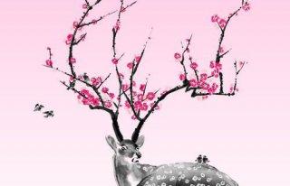 Kwiaciarnia Jelonek Międzyrzecz