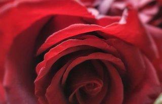 Kwiaciarnia Botanika Radzymin Radzymin