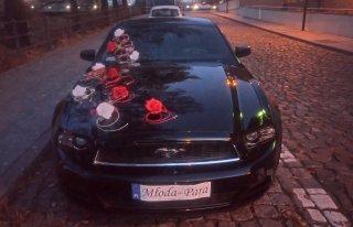 Mustang Bydgoszcz Bydgoszcz