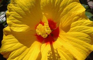 Kwiaciarnia ''Bukiecik'' Czerniejewo
