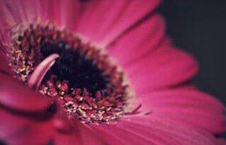 ArtFloristica pracownia florystyczna Łowicz