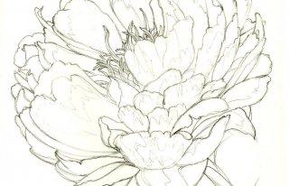 Kwiaciarnia Peonia Kępno