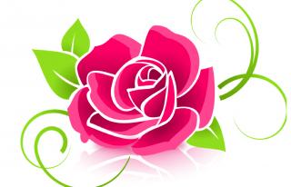 Kwiaciarnia Fuksja Mielec