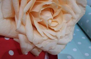 Kwiaciarnia Angela - Skalbmierz Skalbmierz