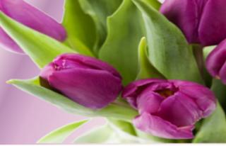 Kwiaciarnia Finezja - Barlinek Barlinek