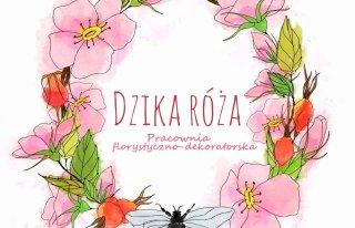 Dzika Róża Lublin