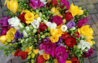 Kwiaty Hurt-Detal Karlino