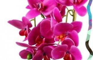 """Kwiaciarnia """"Orchidea"""" Terespol"""