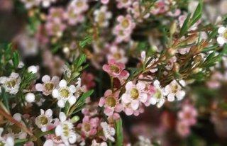 Kwiaciarnia Magnolia Opole