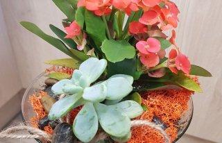 """Kwiaciarnia """"Gardenia pod filarem"""" Słupsk"""