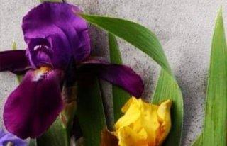 Kwiaciarnia IRYS Lubliniec