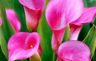 Kwiaciarnia Kalia Kwidzyn