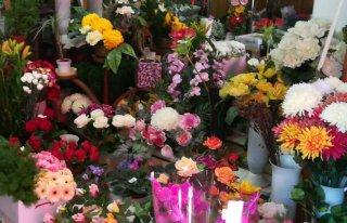 Kwiaciarnia Frezja Orneta