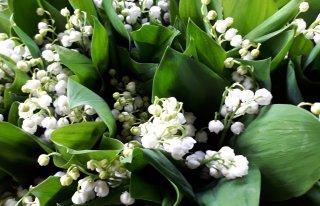 Kwiaciarnia Kamelia Szczecin