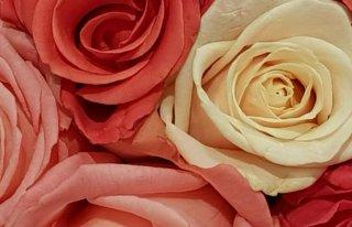 Kwiaciarnia Izabela Myślenice