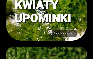 Kwiaciarnia E-J Wróblewscy Rawicz