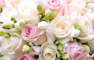 Sun Flowers Kwiaciarnia Hanna Sikorska Świecie